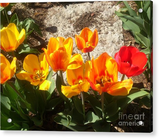 Acrylic Print featuring the photograph Springtime Flowers by Rachel Maynard