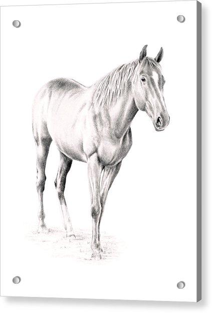 Standing Racehorse Acrylic Print
