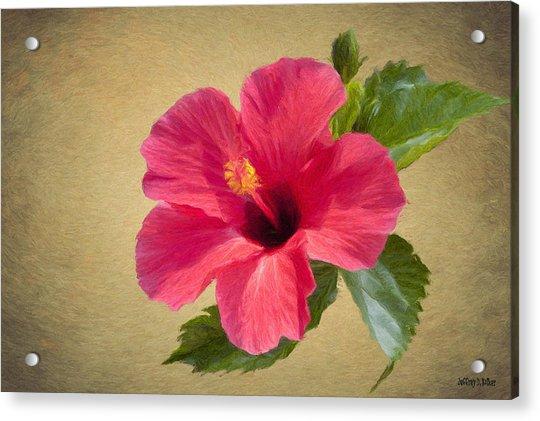 Study In Scarlet Acrylic Print