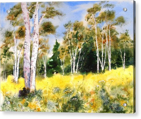 Summer Birches Acrylic Print