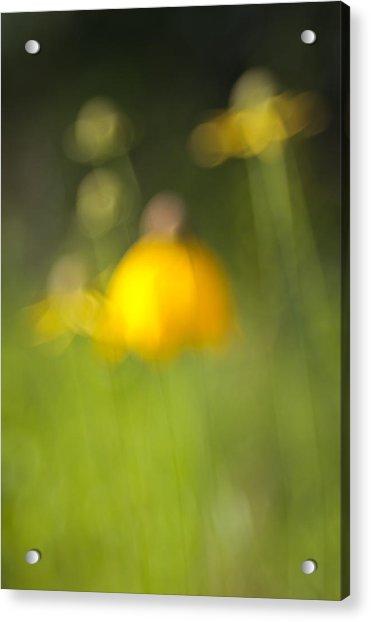 Summer Flowers Acrylic Print by David Wynia