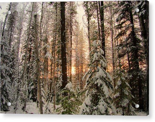 Sun Of Winter Trees Acrylic Print