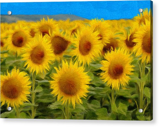 Sunflowers In The Field Acrylic Print