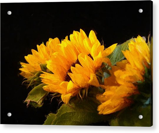 Sunflowers On A Black Background Acrylic Print
