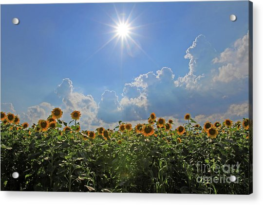Sunflowers With Sun And Clouds 1 Acrylic Print