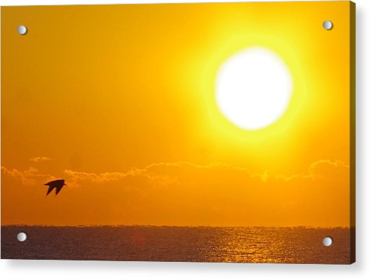 Sunrise And Bird Acrylic Print
