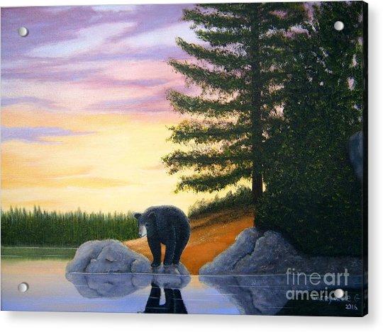Sunset Bear Acrylic Print