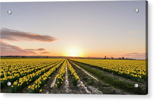 Sunset In Skagit Valley Acrylic Print