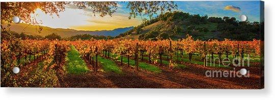 Sunset Over Gamble Vineyards Acrylic Print