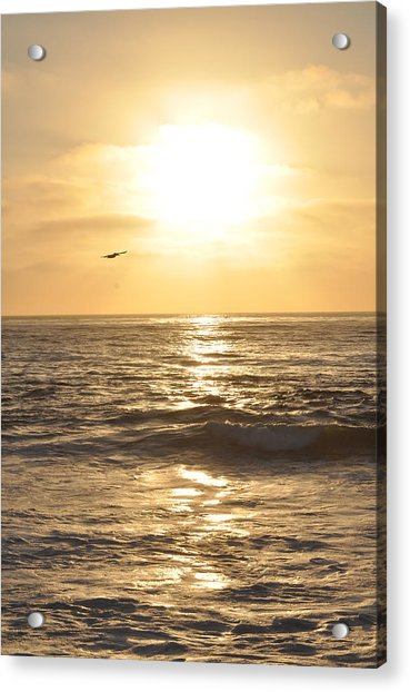 Sunset Pelican Silhouette Acrylic Print