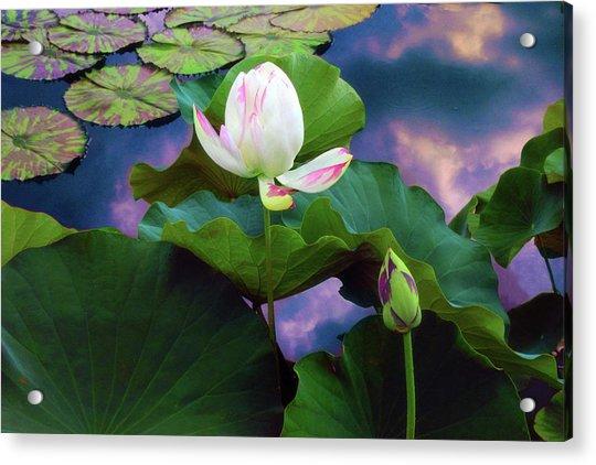 Sunset Pond Lotus Acrylic Print