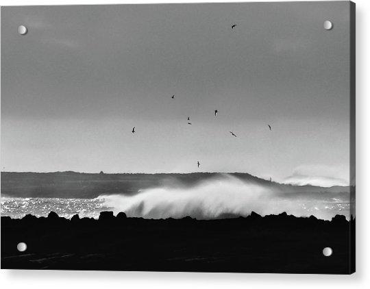 Surf Birds Acrylic Print