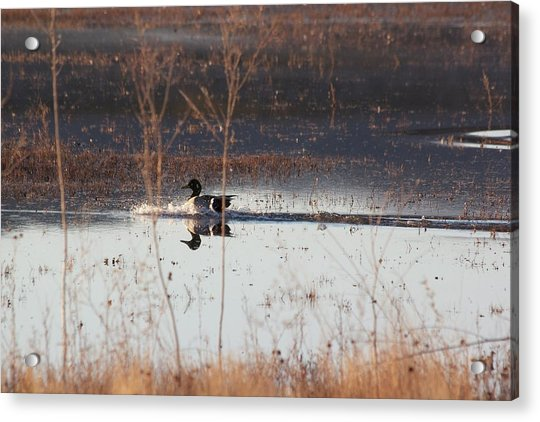 Acrylic Print featuring the pyrography Surfs Up by Michael Lucarelli