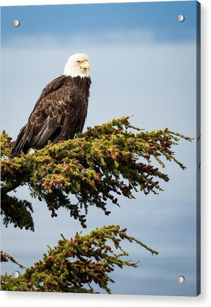 Acrylic Print featuring the photograph Surveying The Treeline by Tim Newton