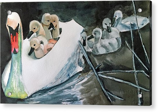 Swan And Cygnets Acrylic Print
