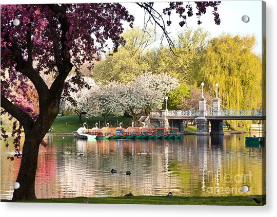 Swan Boats With Apple Blossoms Acrylic Print