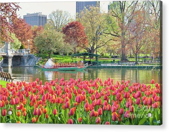 Swans And Tulips 2 Acrylic Print