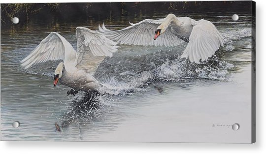 Acrylic Print featuring the painting Swans In Dispute by Alan M Hunt