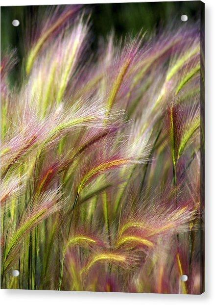 Tall Grass Acrylic Print