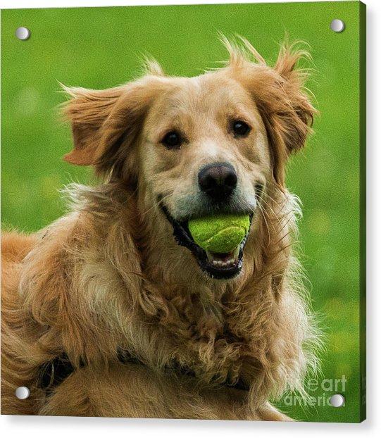 Tennis Is On ..wanna Play? Acrylic Print