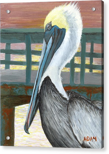 The Brown Pelican Acrylic Print