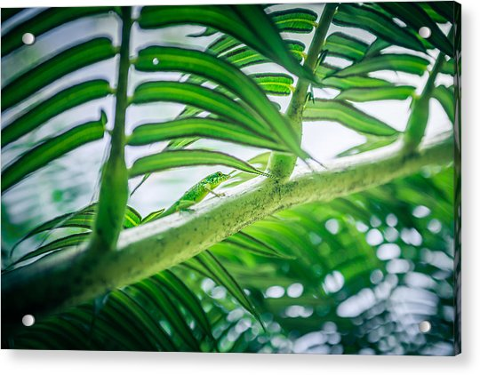 The Camouflaged Acrylic Print