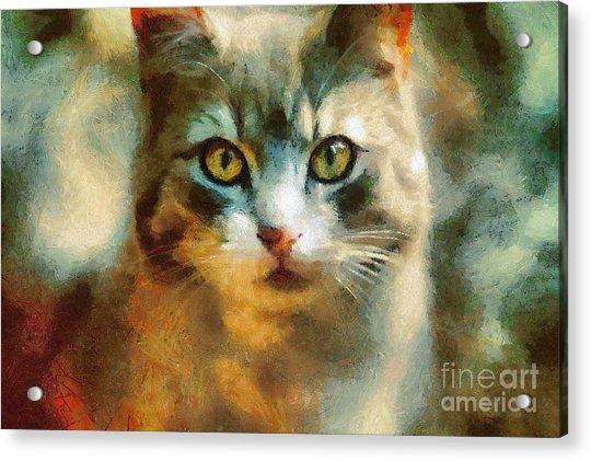 The Cat Eyes Acrylic Print