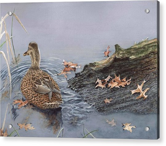 The Duck And The Alligator Acrylic Print
