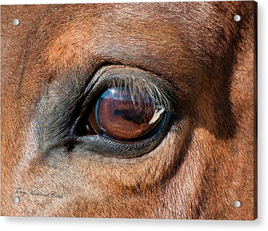 The Equine Eye Acrylic Print