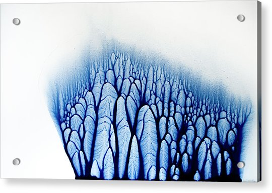 The Forest Tells A Story Acrylic Print