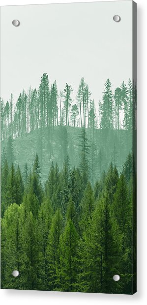 The Green And The Not So Green Acrylic Print