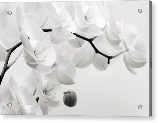 The Last Orchid Acrylic Print