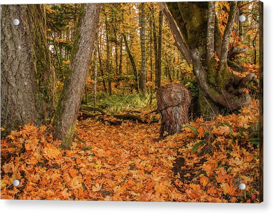 The Leaves Have Fallen Acrylic Print