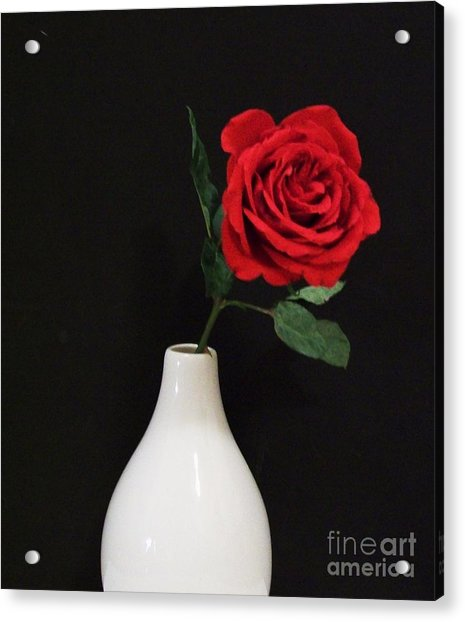 The Lonely Red Rose Acrylic Print by Marsha Heiken