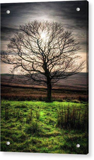 The One Tree Acrylic Print