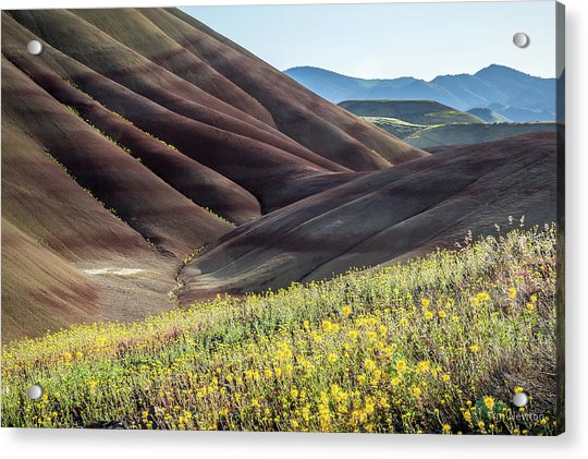 Acrylic Print featuring the photograph The Painted Hills In Bloom by Tim Newton