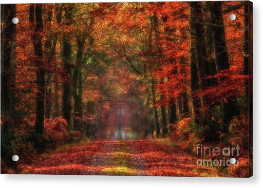 The Red Path 2 Acrylic Print