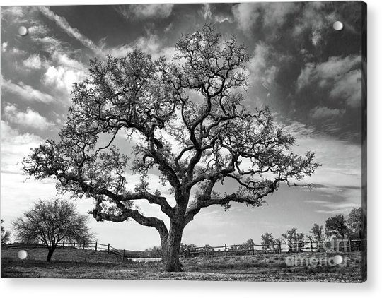 Acrylic Print featuring the photograph The Sentinel Bw by Jemmy Archer