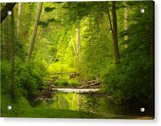 The Swamp Acrylic Print