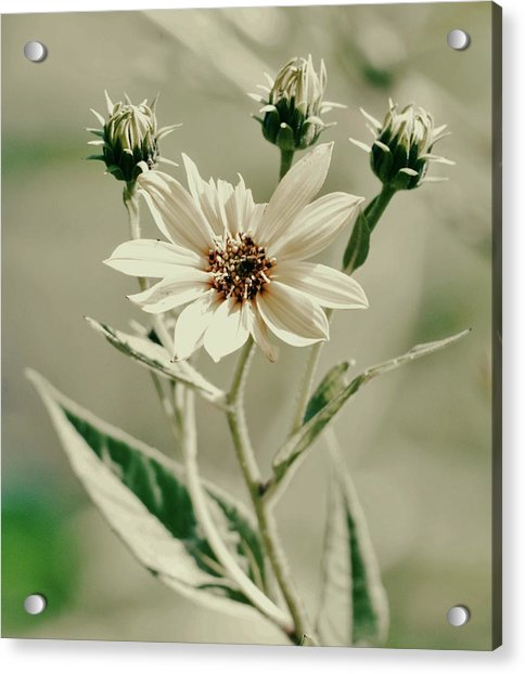 Three Acrylic Print