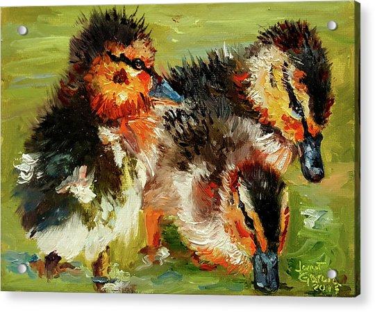Three Little Ducks Acrylic Print