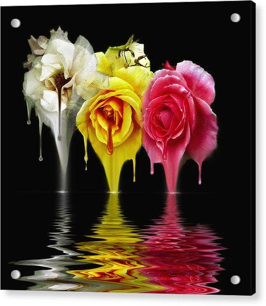Tears Of Roses Acrylic Print