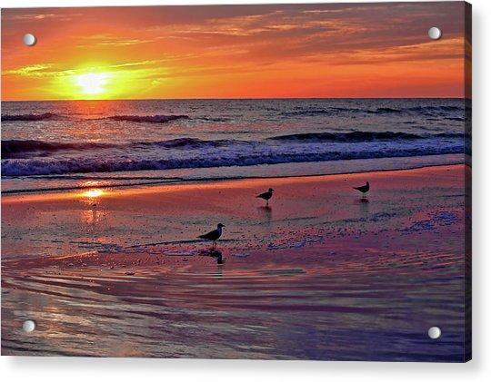 Three Seagulls On A Sunset Beach Acrylic Print