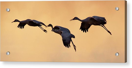 Acrylic Print featuring the pyrography Three's Comapany by Michael Lucarelli