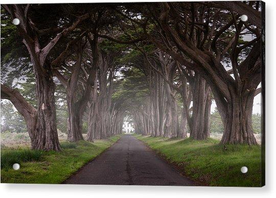 Through The Cypress Acrylic Print