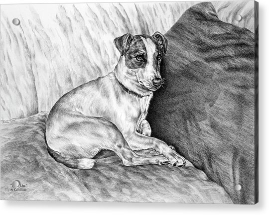 Time Out - Jack Russell Dog Print Acrylic Print