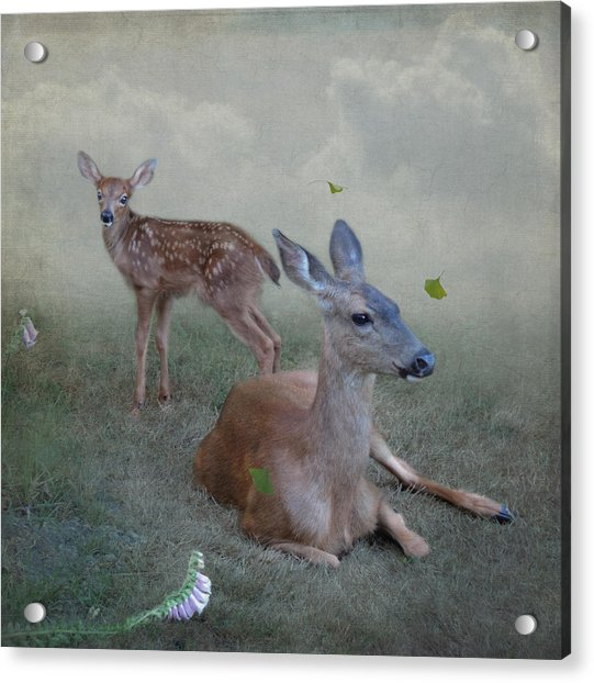 Acrylic Print featuring the photograph Time Stops For Deer by Sally Banfill