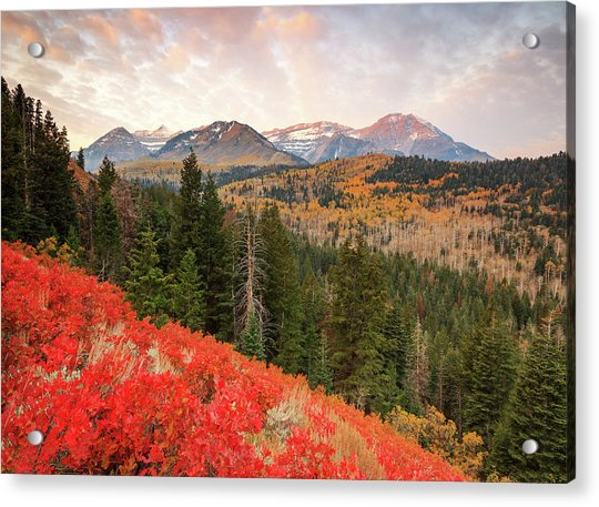 Timp With Red Oak Acrylic Print by Johnny Adolphson