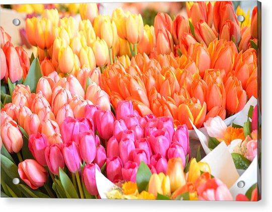 Tons Of Tulips Acrylic Print