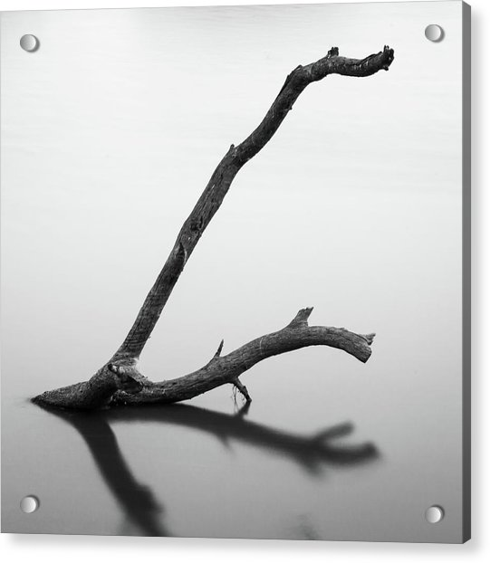 Tree Branch On The Water Acrylic Print